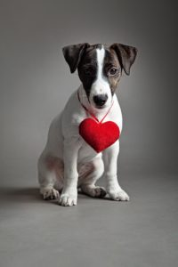 Naturally Reducing The Impact Of & Maintaining Cardiac Function In Dogs In Cats With Heart Disease