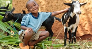 A Wonderful Cause For Animals And People – Heifer International