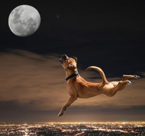Do Full Moons Cause More Seizures In Epileptic Dogs And Cats?