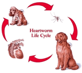Does A Natural Heartworm Prevention Option Exist For Dogs?