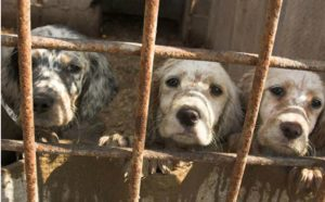 California Becomes First State To Ban Puppy Mill Sales!