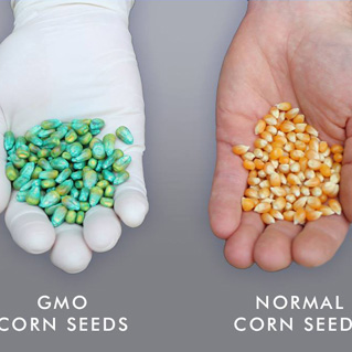 Why Are GMO Foods So Bad For Pets And People?