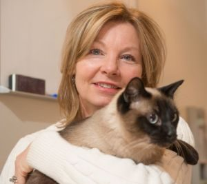 Research At CSU Suggests Stem Cell Therapy Beneficial To Cats In Chronic Kidney Failure
