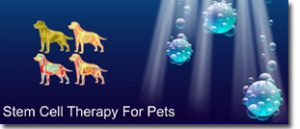 Exciting Cutting Edge Stem Cell Therapy Advances In Veterinary Regenerative Medicine