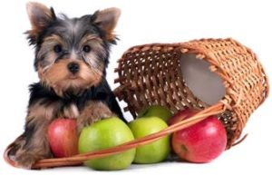 When It Is Advisable To Supplement Dogs With Vitamin C And When It Is Not