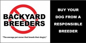 Segue From Last Article – Backyard Breeder Beware Continued!