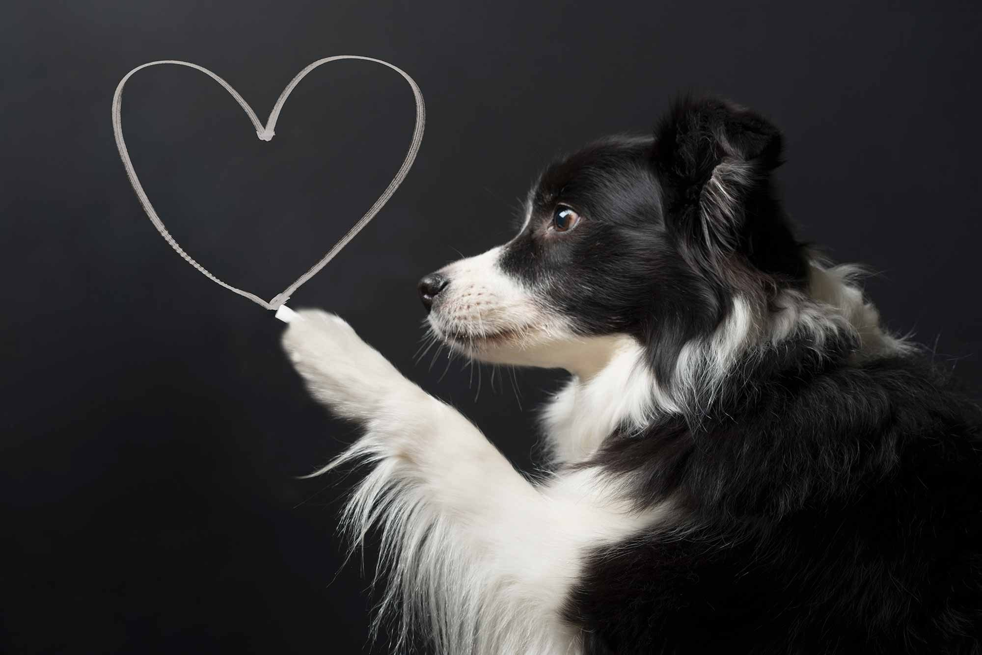 4 Tips To Promote A Healthy Pet Heart