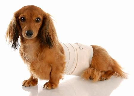 A Natural And Effective Way To Control Post Surgical Pain In Pets