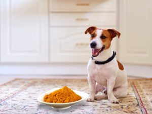 Are There Benefits To Turmeric Administration In Dogs?