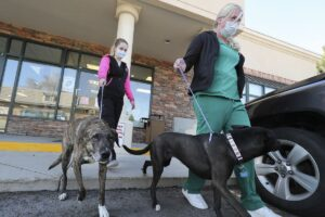 Veterinary Clinics Unusually Busy During Coronavirus Pandemic.  Why?